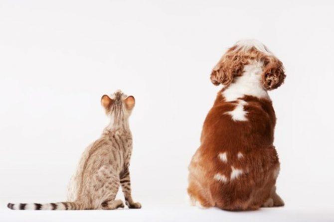 Уједи животиња и беснило